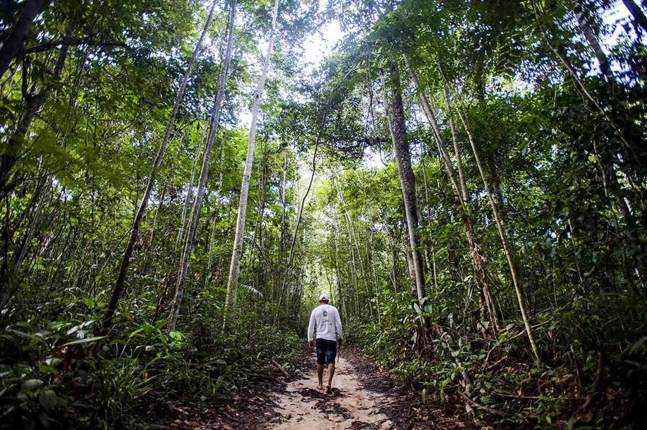 Juruena, MT, Brasil: Antônio Bento de Oliveira caminha em busca de castanheiras por área da reserva legal comunitária do assentamento Vale do Amanhecer.  (Foto: Marcelo Camargo/Agência Brasil)