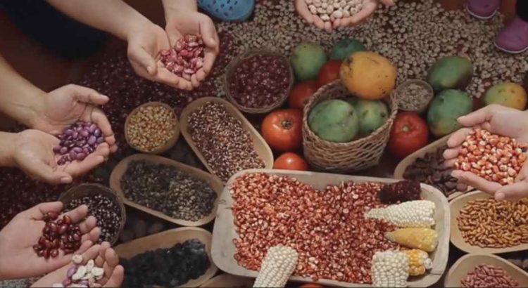 https://racismoambiental.net.br/wp-content/uploads/2018/02/sementes-crioulas-documentario-750x410.jpg
