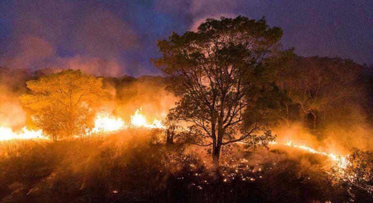 Brasil em Chamas: do Pantanal à Amazônia, a destruição não respeita  fronteiras | Combate Racismo Ambiental